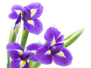 Flori care te inspira. Invata de la ele!
